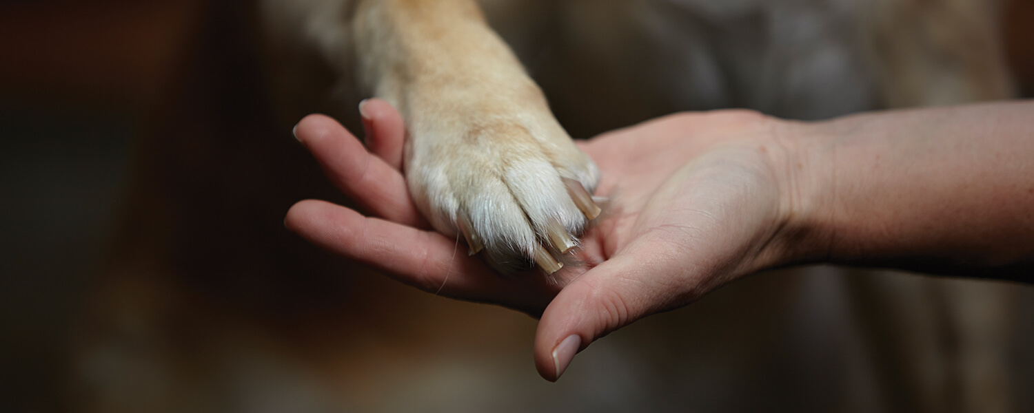 Paw and hand